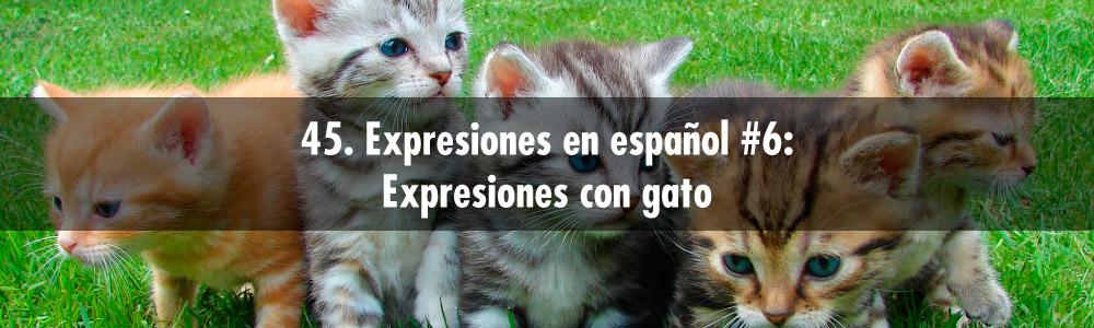 expresion español gato